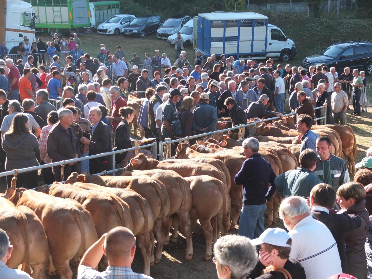 Vaudeville et veaux des champs : la fête du veau sous la mère en Corrèze
